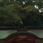 香取神社と白鷺