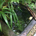 武田菱と巨石の昼下がり@武田神社と昇仙峡