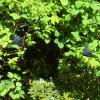 覚醒⁈  キラキラと引き寄せ  浄化