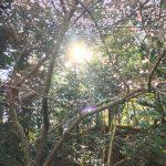 2019.03月下旬のマナカード 瞑想